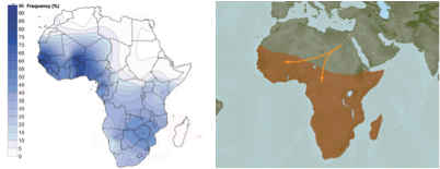 Haplotype E compared to Bantu subsaharan migration map