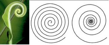 Linear Spiral – Logarithmic Spiral