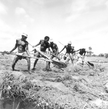 african bantu agriculture