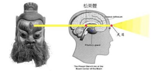Pineal Gland lies at the exact center of the Brain