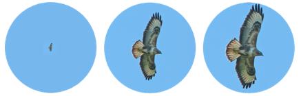 zoom hawk