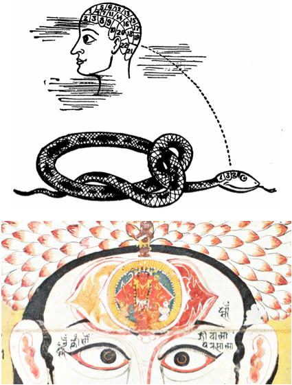 serpent kundalini shiva