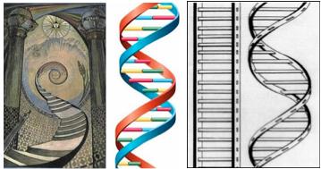 jacobs ladder DNA