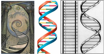 jacobs ladder DNA