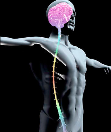chakra spine