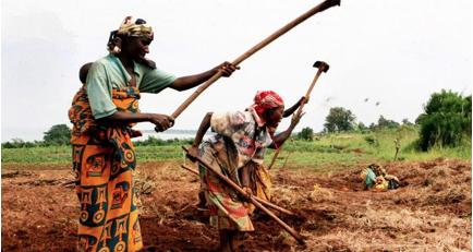 bantu agriculture