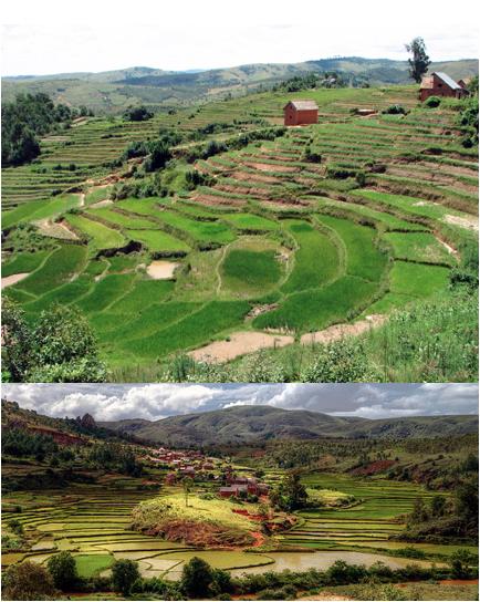 bantu agriculture 1