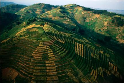 rwanda terraces