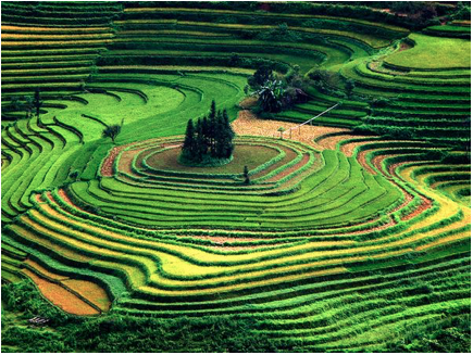 vietnam terraces fields