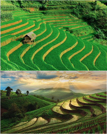 thailand terraced