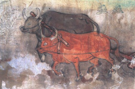 dunhuang cave bull ox agriculture china
