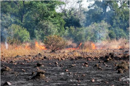 slash and burn shennong africa bantu