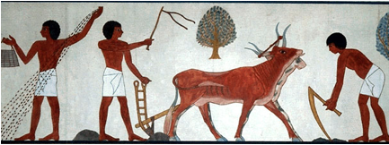 egyptian bull plow agriculture