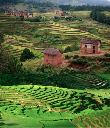 Madagascar Rice Fields of Africa