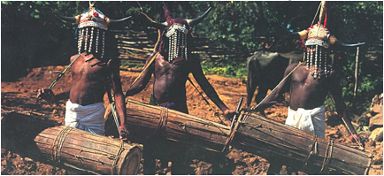 india bull worship
