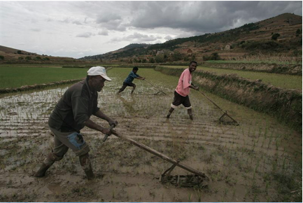 rice plowing from east africa to far east china 1