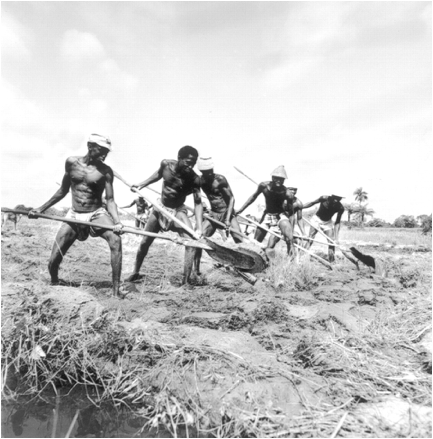 rice plowing from east africa to far east china 5